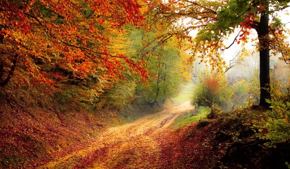 Фото бесплатно свет, природа, природный ландшафт