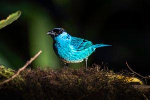 Фото бесплатно птица, позвоночный, клюв