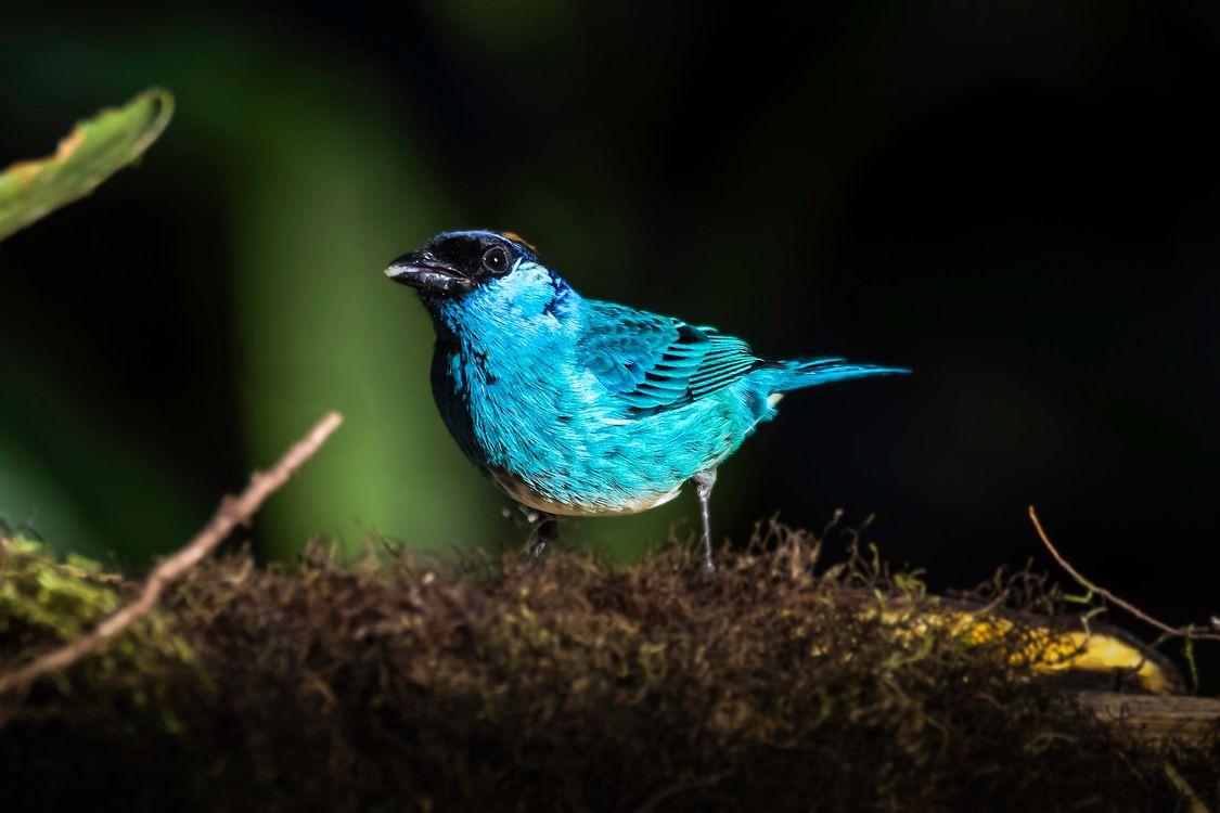 Фото птица позвоночный клюв - бесплатные картинки на Fonwall