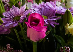 Фото бесплатно роза, хризантемы, цветы, букет, флора, цветочная композиция
