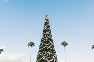 Фото бесплатно дерево, небо, башня