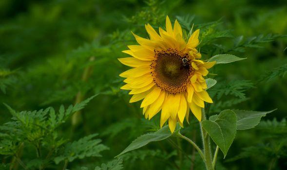 Фото бесплатно макро, подсолнух, цветы