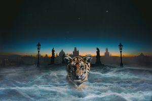 Заставки тигр, кошка, хищник