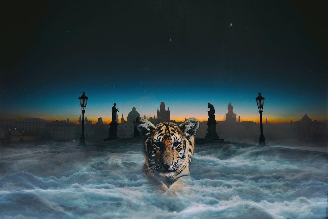 Фото бесплатно тигр, кошка, цифровая обработка - на рабочий стол