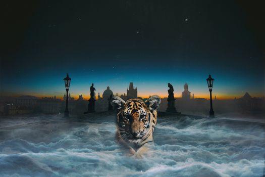 Фото бесплатно тигр, кошка, цифровая обработка