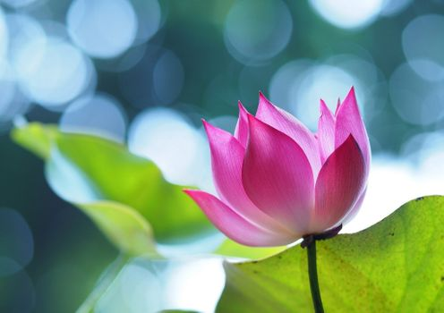 Pink flower on blurred background