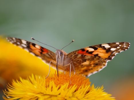 Photo free insect, lepidoptera, animals
