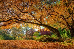 Заставки осень, пейзаж, осенние листья