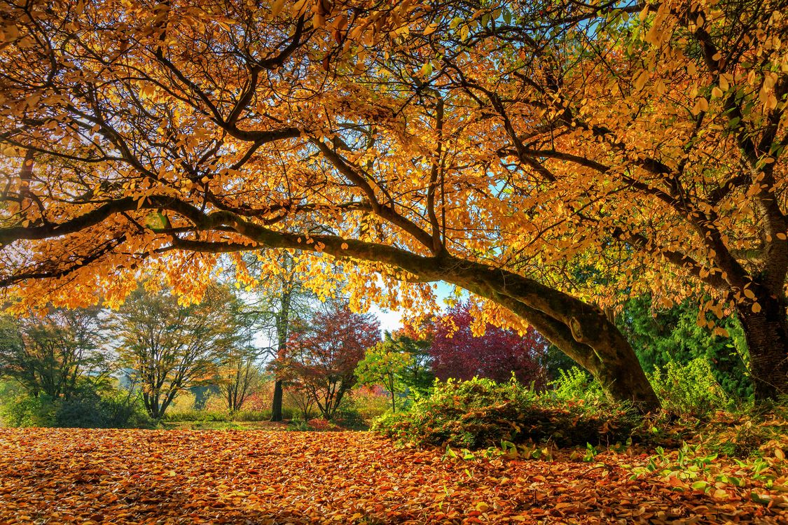 Photos for free autumn, landscape, autumn leaves - to the desktop
