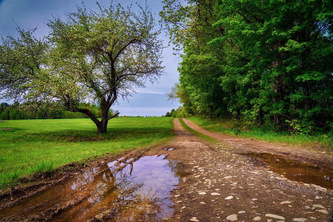 Фото бесплатно пейзаж, дорога, лужа - на рабочий стол