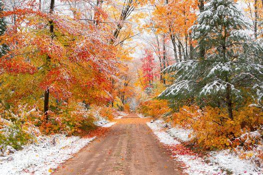 Заставки снег осени в национальном лесе Гиаваты,Мичиган,осень,лес,деревья,дорога,снег,природа,пейзаж,краски осени,осенние краски,осенние листья