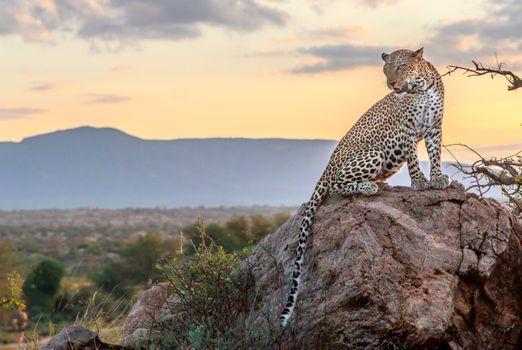 Заставки пятнистый, камень, леопард