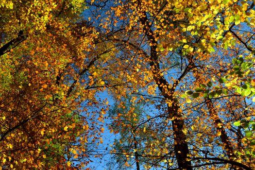 Заставки осень, деревья, кроны, осенние листья, осенние краски, природа