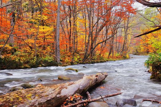 Бесплатные фото осень,река,течение,лес,деревья,пейзаж,осенние краски
