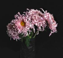 Фото бесплатно букет, флора, хризантемы
