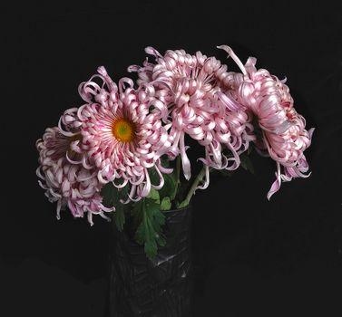 Photo free bouquet, flora, chrysanthemum