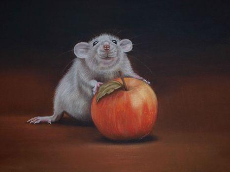 Photo free rat, Apple, art