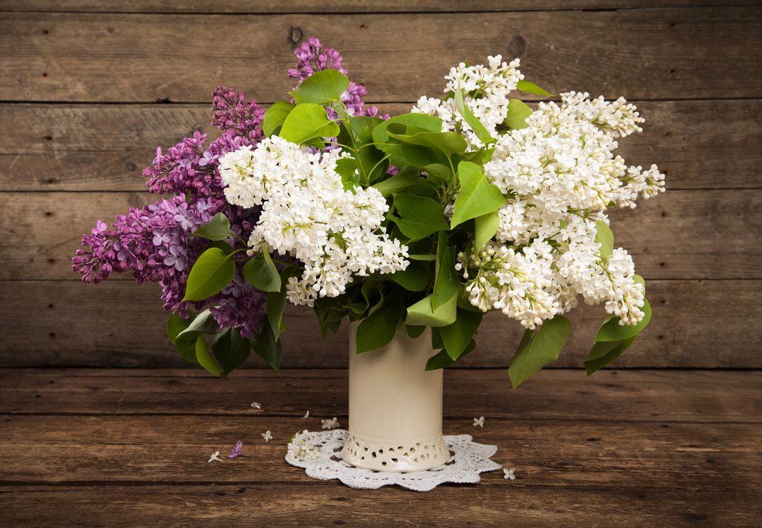 Фото бесплатно сирень, букет, ваза, цветы, деревянный фон, натюрморт, флора, цветение, цветы