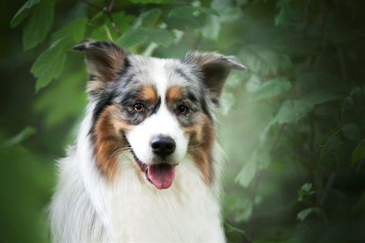 Photo free photograph, dog, pet