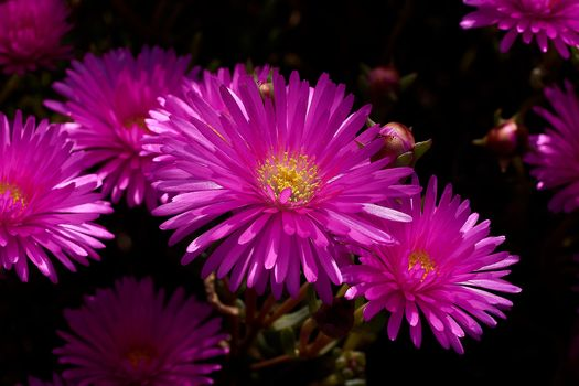 Бесплатные фото цветы,цветочная композиция,цветение,флора