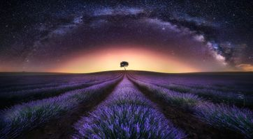 Photo free light, lavender, lavender field sunset
