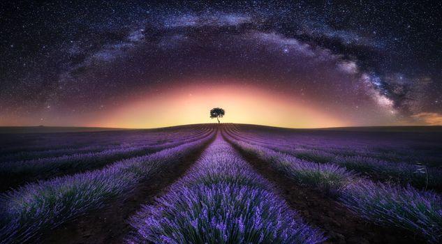 Photo free light, lavender, lavender field sunset