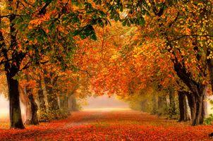 Фото бесплатно деревья, осень, Англия