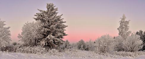 Фото бесплатно зима, закат, снег, деревья, природа, пейзаж, панорама
