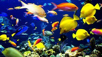 Фото бесплатно рыбки, глубоководные, разноцветные