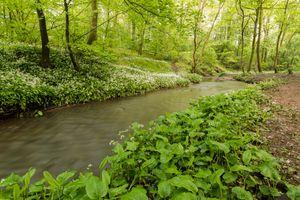 Бесплатные фото лес,речушка,деревья,река,цветы,природа,зелень