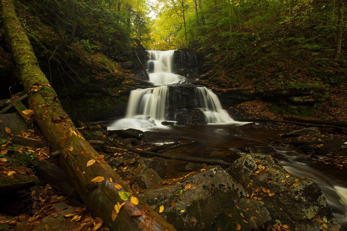 Водопад в старом лесу · бесплатная заставка