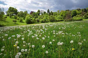 Бесплатные фото поле,одуванчики,трава,холмы,деревья,небо,природа
