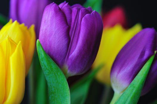 Фото бесплатно тюльпан, цветы, цветок