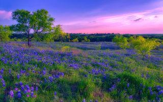 Фото бесплатно закат, поле, луг