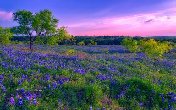 Бесплатные фото закат,поле,луг,цветы,деревья,природа,пейзаж