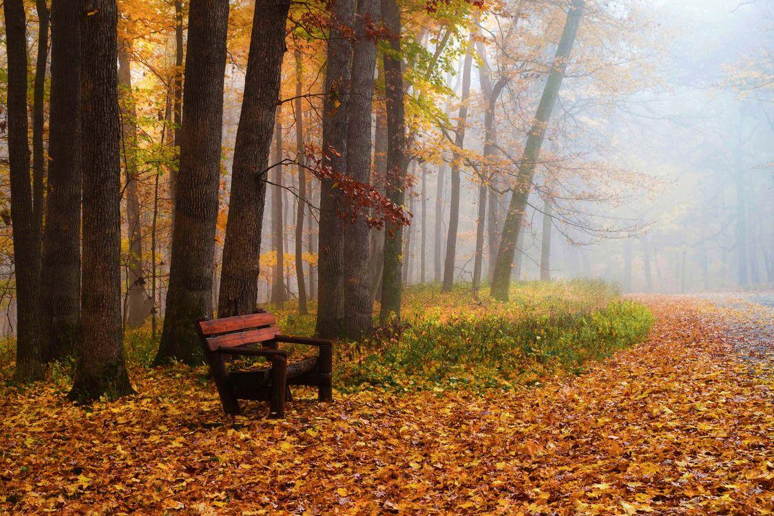 Фото бесплатно осень, скамья, парк, лес, деревья, туман, лавочка, осенние краски, краски осени, осенние листья, природа, пейзаж, пейзажи