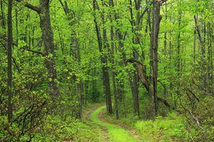 Photo free road, trail, green trail