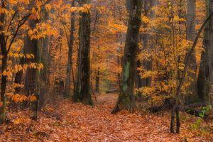 Бесплатные фото осень,лес,деревья,природа,осенние листья,осенние краски,краски осени