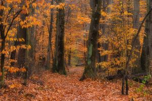 Фото бесплатно осенние листья, лес, цвета осени