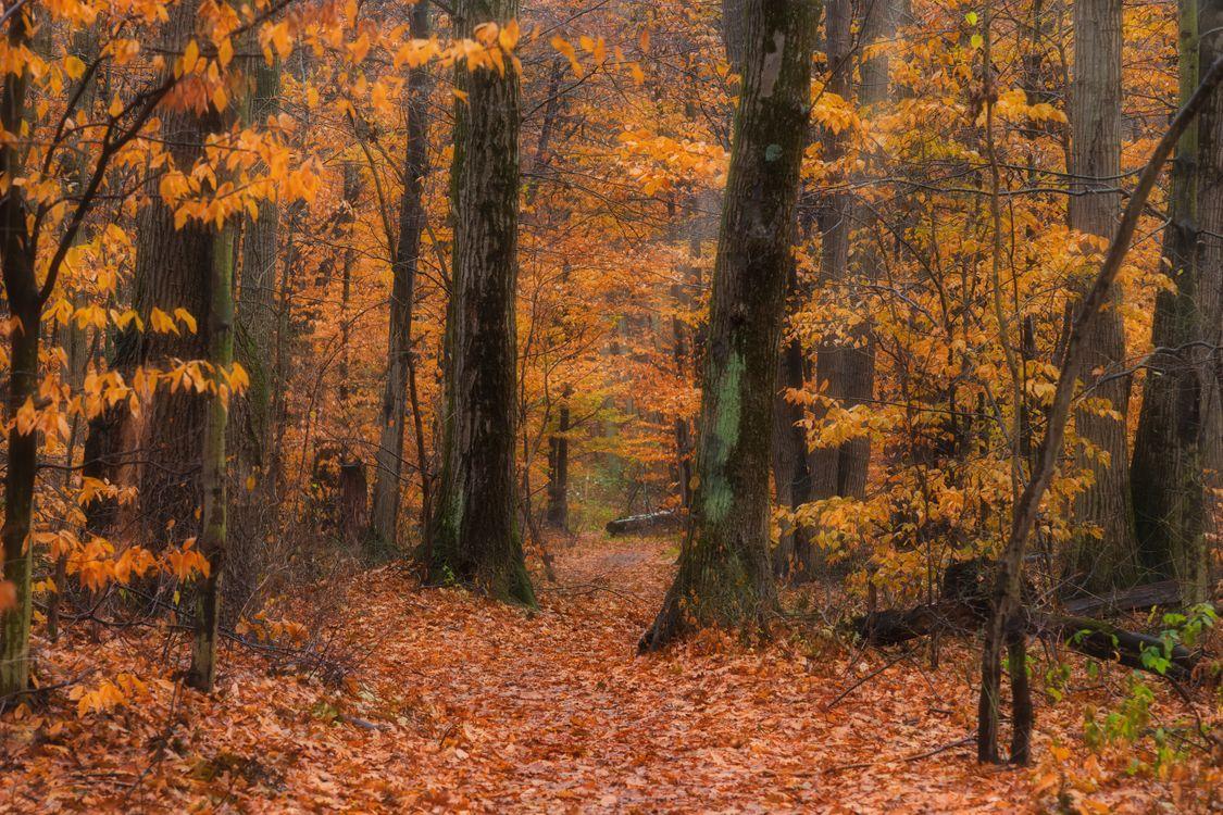 Фото бесплатно осень, лес, деревья, природа, осенние листья, осенние краски, краски осени, пейзаж, пейзажи