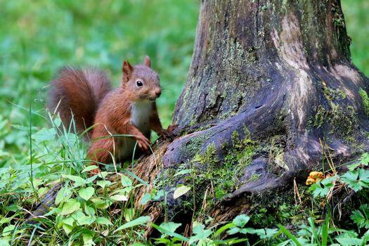 Фото бесплатно белка, дерево, животное