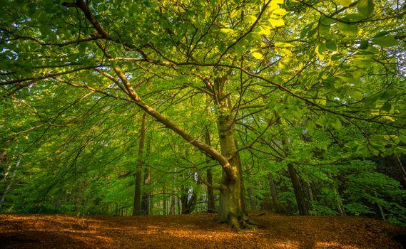Заставки лес,старое дерево,ветви,листья,парк,деревья,природа