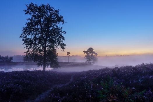 Бесплатные фото закат,поле,озеро,водоём,туман,деревья,природа,пейзаж,Гельдерланд,Нидерланды