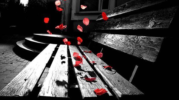Фото бесплатно скамейка, цвета, цветы