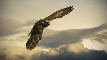 Фото бесплатно небо, облака, полет
