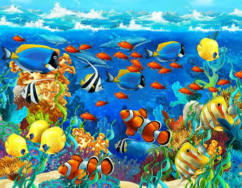 Фото бесплатно кораллы, дельфины, рыбы - на рабочий стол