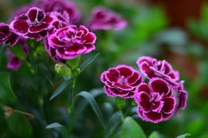Бесплатные фото цветок,макрос,природа,завод,макро цветок,близко,розовый