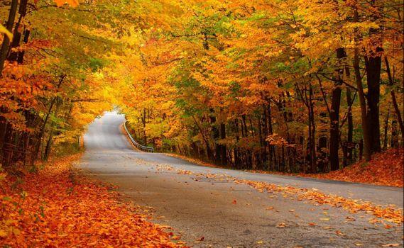 Заставки цвета, времена года, деревья