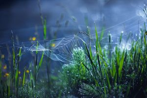 Photo free grass, cobwebs, plants