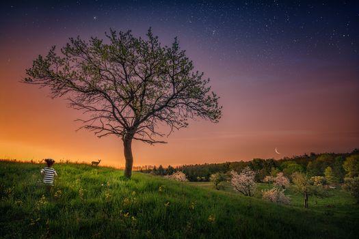 Бесплатные фото закат,поле,холм,трава,небо,дерево,месяц,девочка,олень,пейзаж